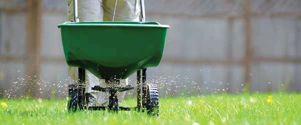 Kitchener Waterloo Lawn Fertilizing